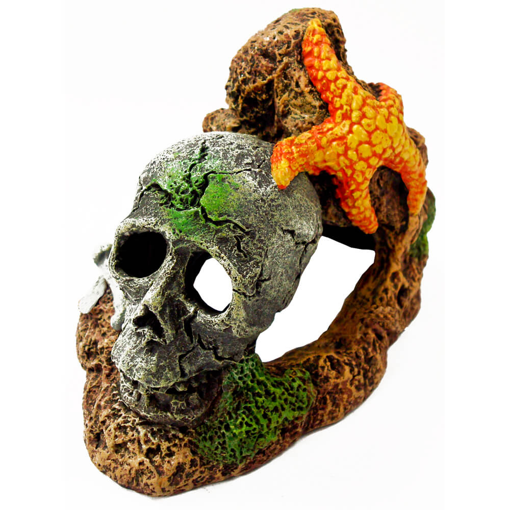 EE-366 - Exotic Environments® Skull With Starfish